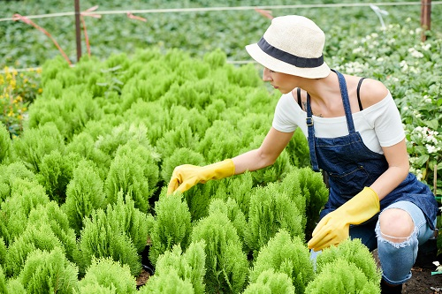 paysagiste à Mougins