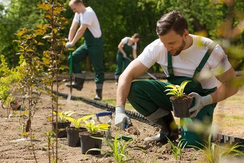 un professionnel du jardinage