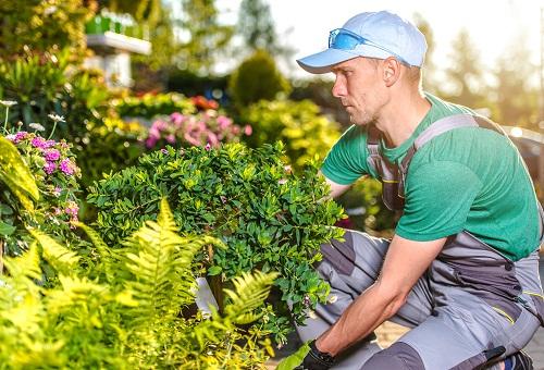 un paysagiste proche d'Angoulême